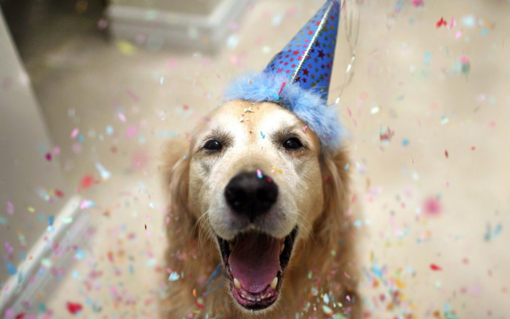 Funny Birthday dog picture