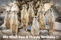 Meerkats wishes you a Happy Birthday