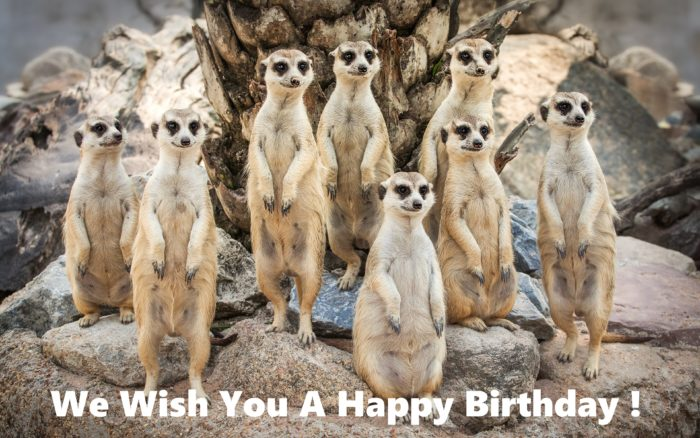 Meerkats wishes you a Happy Birthday 700x438
