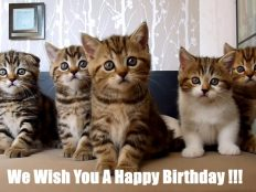 Very cute kitties wishes you happy birthday