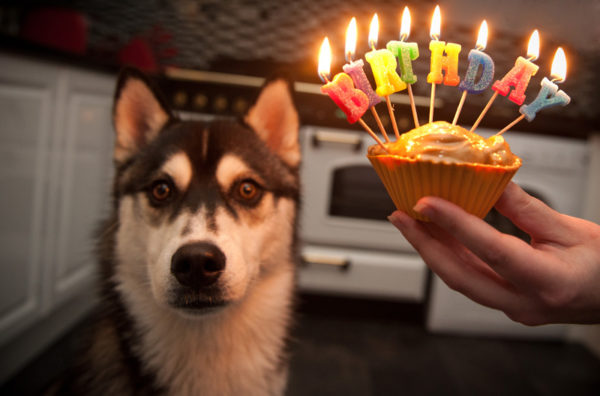 funny birthday dog picture 1 600x396