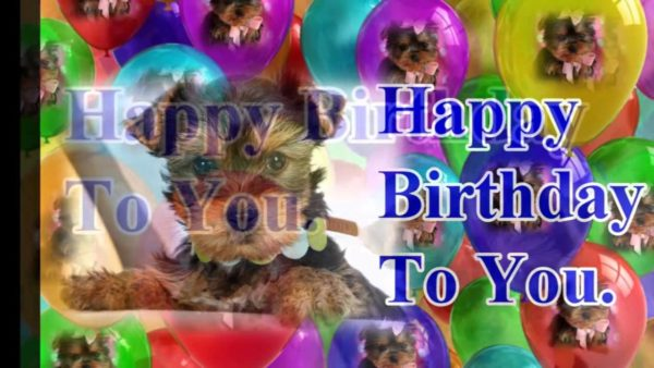 funny birthday dog picture 2 600x338