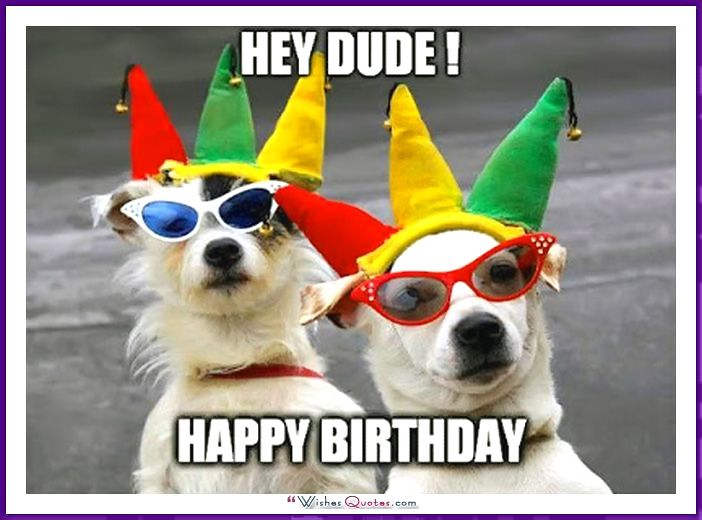 Funny Birthday Dog Picture- Happy Birthday Pictures