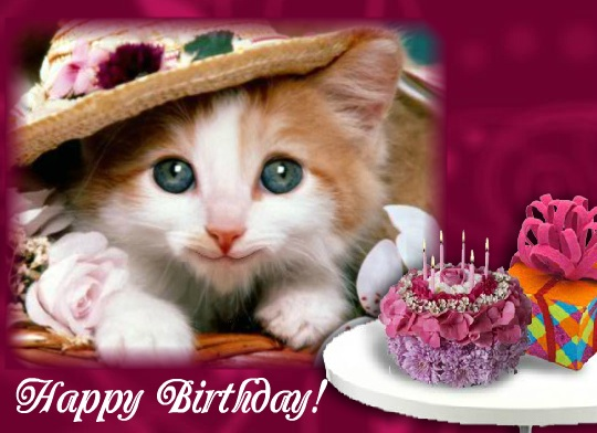 happy birthday with kitten and flowers pink red roses