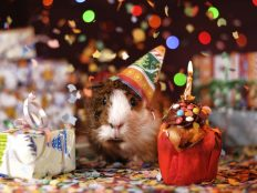 Happy Birthday, Funny animals