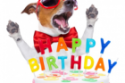 Happy Birthday, funny dog, cake