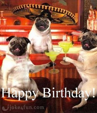 Happy birthday, funny pug 3