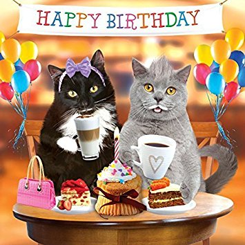 Happy birthday, Cat birthday card 5