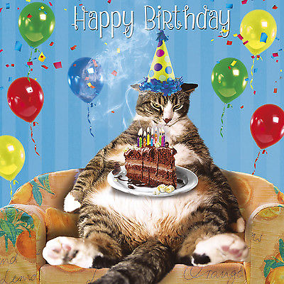 Happy birthday, Cat birthday card 2