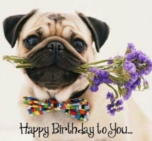 best birthday quotes happy birthday pics dogs funny pug wishing happy birthday to you