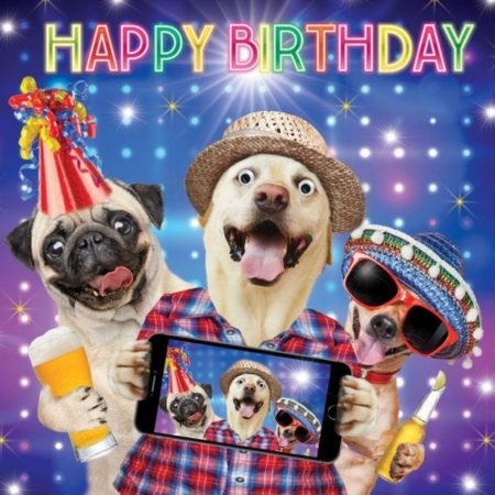 Happy birthday, funny pug 1
